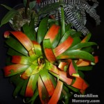 Images from the Oregon Orchid Society 2013 Show